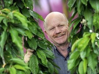 Man peering between hanging tree branches